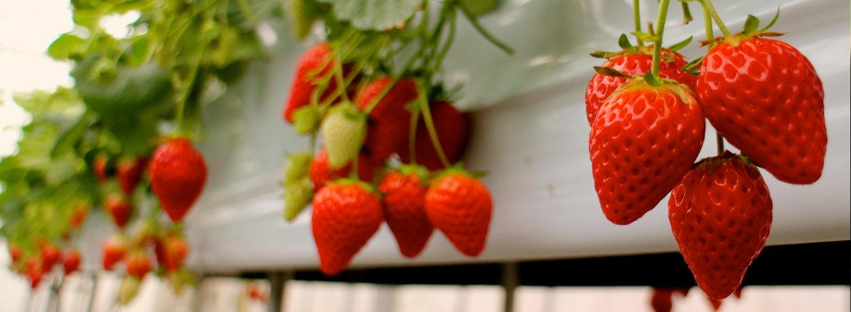 食事で生活習慣病を予防し、美しく健康的な毎日を